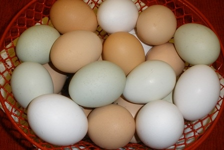 Do Chicken Eggs Contain Good Cholesterol or Bad Cholesterol?