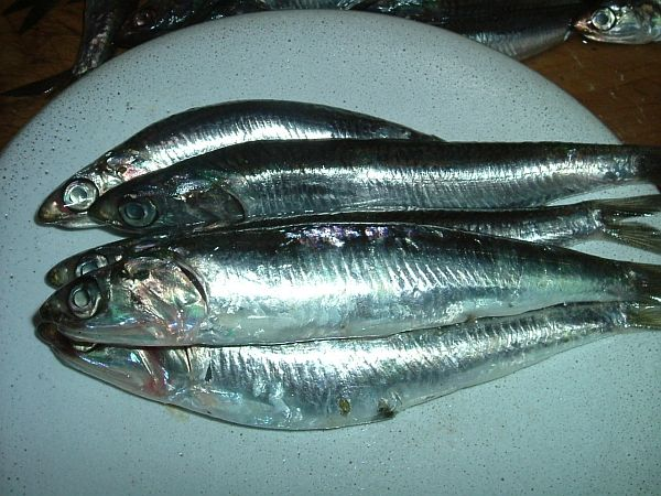 Why You Should Eat More Sardines