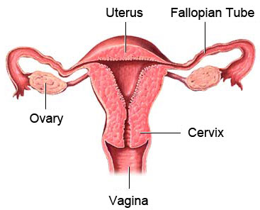 Beware of the Most Common Benign Tumor among Women Called Uterine Fibroids
